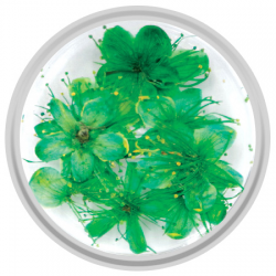 Green Dried Flowers - 10 Pieces