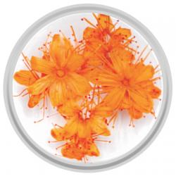 Orange dried Flowers - 10 Pieces