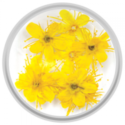 Yellow Dried Flowers - 10 Pieces